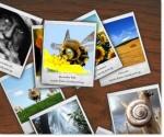 Polaroid Flash Gallery